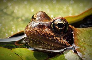 frog-1445504_640